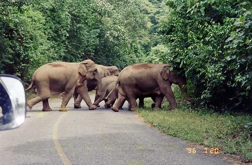 野生の象 - カオヤイ国立公園 by Ik T