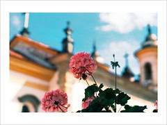 Flowers and Towers (W Gaspar) Tags: travel flowers brazil blur flores minasgerais film church brasil 50mm nikon minas kodak towers igreja viagem filme f80 baroque mariana torres barroco ektar desfoque ektar100 wgaspar