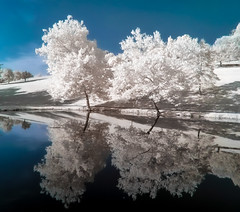 Negative Reflections (Thomas James Caldwell) Tags: park blue trees white abstract west color reflection nature water ir virginia infrared oglebay schenck laked