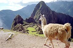 Peru-238 - Machu Picchu - Just walk in front of me...