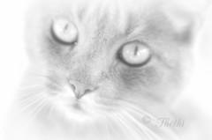 150813 BWcT 151027 © Théthi ( 9 pics ) (thethi: pls read my first comment, tks) Tags: animal chat yeux pet bw nb hautelumière photoshopped namur wallonie belgique belgium ruby20 bestof2015 setbwsepia fact70 rubyfrontpage halloffame setanimaux setaout fact80 24209061 l10 faves98