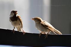 Nature: Birds (Nabil Molinari Photography) Tags: nature birds