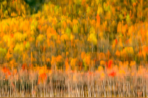 Monet inspred Autumn