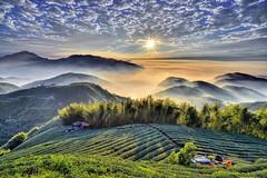 大崙山~夕照茶園~ Tea farm Sunset (Shang-fu Dai) Tags: sunset sky clouds landscape nikon taiwan 南投 formosa 台灣 雲 山 日落 風景 天空 d800 雲海 原野 星芒 戶外 cloudssea 銀杏森林 夕彩 af20mmf28d 武岫 大崙山觀光茶園