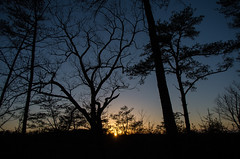 Sring sunset