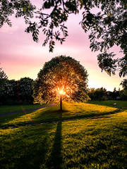 Sunset in the park - Dublin, Ireland - Landscape photography