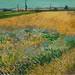 17066-Van-Gogh-Museum