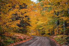 Autumn Fire on Heartbreak Hill (M@rtha Decker) Tags: heartbreak ridge superior national forest fall colors autumn leaves maple trees orange yellow brilliant 166 six hundred road logging logger horse wagon lumber woods wood honeywell pentax spotmatic sp1000 slr 35mm film camera martha decker minnesota minn mn grand marais lutsen tofte justpentax onlyinmn outside outdoors trip drive nature service usfs flickriver