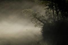 onirica (anna barbi) Tags: dorato uccello albero nebbi tana