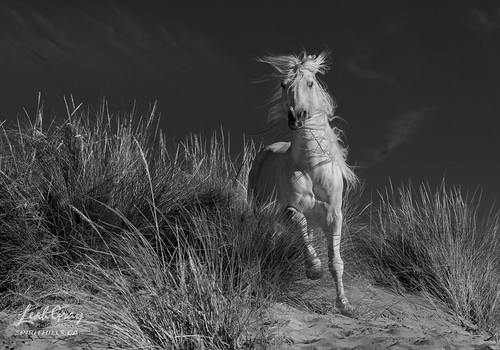 """Wild in the Sand • <a style=""""font-size:0.8em;"""" href=""""http://www.flickr.com/photos/106269596@N05/29324077457/"""" target=""""_blank"""">View on Flickr</a>"""
