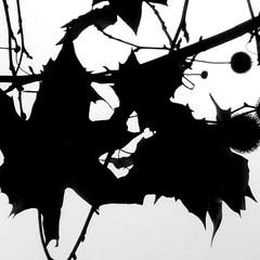 "graphic art natural / on black please ! <a style=""margin-left:10px; font-size:0.8em;"" href=""http://www.flickr.com/photos/14085101@N07/3016614572/"" target=""_blank"">@flickr</a>"
