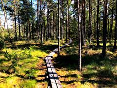 Hiking through forests in Såne region, south Sweden