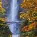 Multonomah Falls Fall Colors