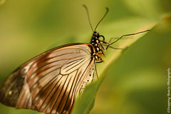 850_1582.jpg (Snapping Beauty) Tags: publicpark natural day virginia butterfly nature selectivefocus abstract naturewildlife insects beautyinnature horizontal places nopeople esp