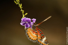 850_1595.jpg (Snapping Beauty) Tags: publicpark natural day virginia butterfly nature selectivefocus abstract naturewildlife insects beautyinnature horizontal places nopeople esp