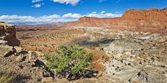 Chimney Rock Trail (Ray Chiarello) Tags: chimneyrocktrail capitolreefnationalpark utah desert southwest landscape mountains clouds canon5dmarkiii canonef1635mmf4lisusm oblong
