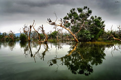 waterland (dim.pagiantzas | photography) Tags: landscape water waterscape land reflections nature trees plants birds sky clouds cloudy colors lakes kerkini greece outdoor sony serene