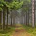 Wald bei Lehesten