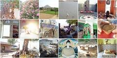 rajmosaic4 (belight7) Tags: pushkar rajasthan india mosaic travel lake flowers puja cows chai friends town