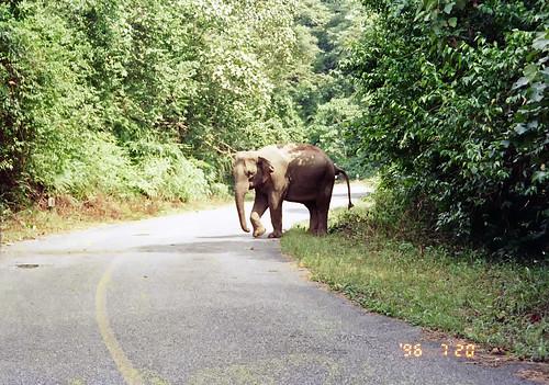 Khao Yai National Park, Thai by Ik T