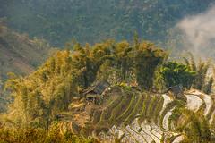 _J5K6563.0212.Ngải Thầu.Bát Xát.Lào Cai. (hoanglongphoto) Tags: asia asian vietnam northvietnam northernvietnam northeastvietnam landscape scenery vietnamlandscape vietnamscenery mountain flanksmountain tophill terraces terracedfields terracedfieldsinvietnam theforest bambo house manyhouses morning canon canoneos1dsmarkiii canonef70200mmf28lisiiusm đôngbắc làocai bátxát ngảithầu ruộngbậcthang ruộngbâcthangngảithầu núi sườnnúi đỉnhđồi ngôinhà nhữngngôinhà buổisáng câytre bụitre phongcảnhytí