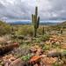 Mountain Trail in Desert Landscape