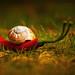 scharfe Schnegge😉, sharp-snail