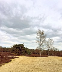 a cloudy afternoon (Sylvia Okkerse) Tags: heathland heath sand trees couds cloudy
