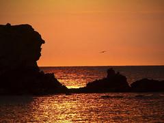 sunrise sur le cap d'agde (doumé piazzolli) Tags: occitanie france pêcheur sunrise hérault languedoc reflets doré mediterranèe mer sea seagull oiseau bird ciel nuage aurore aube rocher horizon pêche lumix fz200 capdagde leverdujour lagrandeconque dagde pointeducapdagde