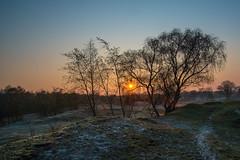 Sunrise Zeepeduinen (de_frakke) Tags: n zeelandnl dunes berken birch