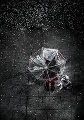 Umbrella (monsugar) Tags: mascota paraguas gente blancoynegro texturas calle lluvia nieve persona