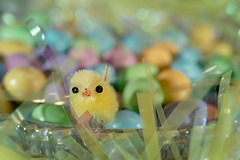 Pastel Peep HMM (Dotsy McCurly) Tags: macromondays pastel hmm happymacromonday peep chick mm candy soft colors macro canoneos80d efs35mmf28macroisstm easter