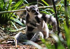IMG_3668edit (Chloe Tidd Photography) Tags: marwell animalphotography animal animalportraits