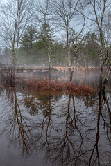 (Mr. Tailwagger) Tags: leica q tailwagger royalston ma river flooding trees reflection fog bridge mist