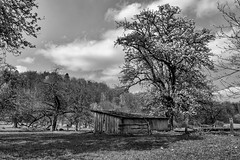 Frühling in SW / Spring on SW (ludwigrudolf232) Tags: früghling einfarbig birnbaum schafweide