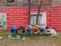 Pussycat Homes (lazy south's travels) Tags: turkey istanbul turkish kennel container box cat kitty stray urban road street scene