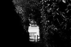 On the way to the park (tercrossman87) Tags: canon ftb ilford hp5 400 1600 push ilfotec microphen stock film home development plustek 8200i 50mm 18 fd