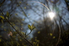 Springtime sun flare (iz.andre) Tags: lens vintage old forest maple leaf backlight ray light nature green prime sony alpha 7 mk2 a7ii bokeh magic colour f2 gras river water bubble shadow tokina vivitar 35mm 28 wide angle flare sun