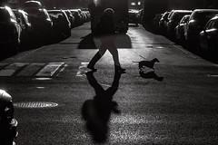 IMG_7752-Edit.jpg (rsvatox) Tags: streetphotography shadows crosswalk urban monochrome street people dog city blackandwhite saintpetersburg