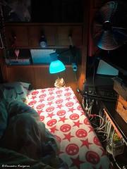 lili-lumière© (alexandrarougeron) Tags: photo alexandra rougeron lili chat minou chou bébé belle beauté félin féline mignonne