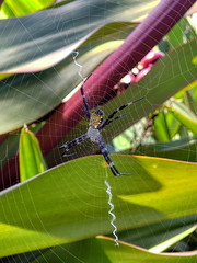 Maui Adventurin'-57 (Maggie Houtz) Tags: android kahanugarden macro maui note9 phoneography spider spiderweb