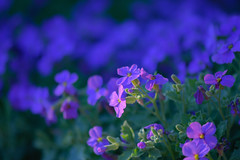 No flower is an Island, yeah no flower stands alone (Paul Wrights Reserved) Tags: flower flowers flowering wildflowers bokh bokehphotography bokehlicious bold bright beautiful beaut family focus infocus outoffocus nature naturephotography