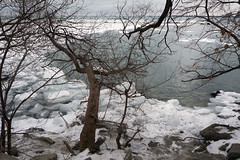 (geowelch) Tags: toronto lakeshore lakeontario shoreline ice baretrees landscape cold winter branches sonya6000 sonysel185535561855mm
