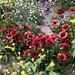 PHX Desert Botanical Garden IMG_2164