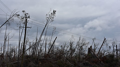 030219-633F (kzzzkc) Tags: nikon d750 usa florida nearpanamacity damage hurricanmichael october2018 grass trees pole wires cloudy day