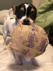 I'm Lovin' It (Cindy's Here) Tags: mcdonaldsslogan peanut mcdouble hamburger iphone 119 wellknownadvertisingslogan 85 100xthe2019edition 100x2019 image21100 imlovinit