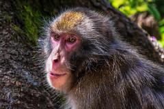 Kärnten Affenwald cutt (tim.lee Rookie Photograph) Tags: affenwald kärnten österreich nikon7100 natur nationalpark naturschutz naturschutzgebiet travel tiere timleerookie timlee nikon