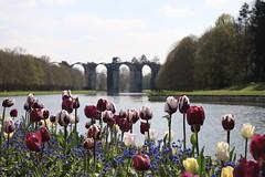 « Celui qui cueille une fleur dérange une étoile . ». T. Monod (OGNB) Tags: canon6dmarkii landscape paysage flowers fleurs tulipes maintenon château viaduc
