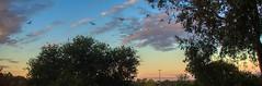 #106/365 Low Flying Lorikeets at Dusk (imageo) Tags: birdsinflight dailyphoto dusk 365project
