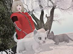 Cat and cherry blossoms (ღ:Yuz Lowbeamღ:) Tags: secondlife fashion cheveux silveryk tss ppd jian gacha animal cat sakura spring 6doo maitreya virtual world private